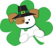Perrito irlandés Foto de archivo libre de regalías