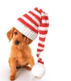 Perrito irlandés de oro de la Navidad Foto de archivo libre de regalías
