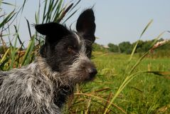 Perrito joven en el río Foto de archivo libre de regalías