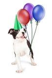 Perrito juguetón y feliz que cría a Paw Up Imagen de archivo