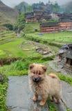 Perrito lanudo del jengibre que se sienta en piedra en campo chino. foto de archivo libre de regalías
