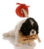 Perrito libre Imagen de archivo libre de regalías