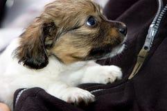 Perrito lindo Foto de archivo libre de regalías