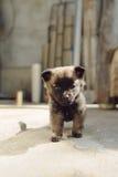 Perrito lindo Imagen de archivo