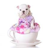 Perrito lindo Imagen de archivo libre de regalías