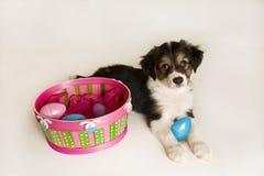 Perrito lindo al lado de la cesta de Pascua con los huevos plásticos Imagen de archivo