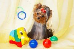 Perrito lindo con los juguetes Imagen de archivo