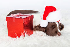 Perrito lindo de la Navidad con el presente foto de archivo libre de regalías