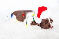 Perrito lindo de la Navidad envuelto en luces fotos de archivo