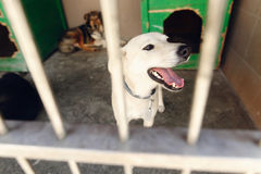 Perrito lindo de Labrador que mira a través de la jaula del refugio, sonriendo, emoti Fotos de archivo