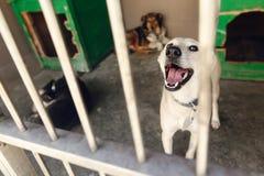 Perrito lindo de Labrador que mira a través de la jaula del refugio, sonriendo, emoti Foto de archivo