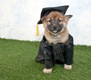 Perrito de graduación fotos de archivo