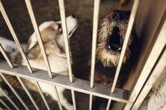Perrito lindo del pequeño perro que grita en la jaula del refugio, mamá emocional triste Fotos de archivo