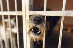 Perrito lindo del pequeño perro que grita en la jaula del refugio, mamá emocional triste Imagen de archivo libre de regalías