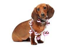 Perrito lindo del perro basset con una bola de la Navidad Foto de archivo libre de regalías