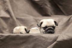 Perrito lindo del perro del barro amasado Imagen de archivo