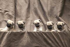 Perrito lindo del perro del barro amasado Fotografía de archivo