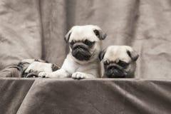 Perrito lindo del perro del barro amasado Fotografía de archivo libre de regalías