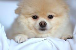 Perrito lindo en cesta Foto de archivo