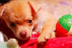 Perrito lindo en la jaula Fotos de archivo libres de regalías