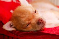 Perrito lindo en la jaula Imagen de archivo