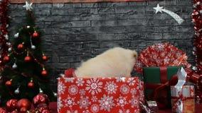 Perrito lindo en un regalo del ` s del Año Nuevo almacen de metraje de vídeo