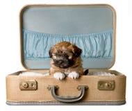 Perrito lindo en una maleta de la vendimia Imagen de archivo