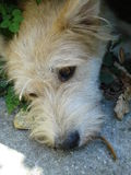 Perrito lindo entre las malas hierbas Imagen de archivo