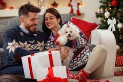Perrito lindo Meltzer como regalo para la Navidad imágenes de archivo libres de regalías