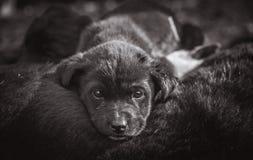 Perrito lindo que abraza Fotografía de archivo