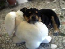Perrito lindo que duerme en el juguete del conejito Fotos de archivo