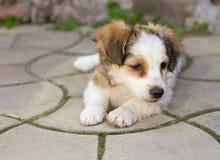 Perrito lindo que pone en el pavimento Imagen de archivo