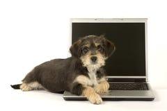 Perrito lindo y una computadora portátil Fotografía de archivo libre de regalías