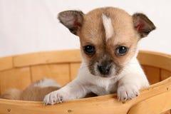Perrito móvil Imagen de archivo libre de regalías