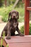 Perrito marrón agradable en el pequeño puente del jardín Imagen de archivo