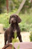 Perrito marrón agradable en el pequeño puente del jardín Imágenes de archivo libres de regalías
