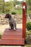 Perrito marrón agradable en el pequeño puente del jardín Fotos de archivo libres de regalías