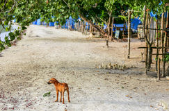 Perrito marrón lindo del perro en una playa con los árboles Fotografía de archivo libre de regalías