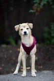 Perrito mezclado adorable de la raza que presenta al aire libre foto de archivo
