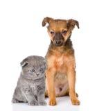 Perrito mezclado de la raza y gatito británico del shorthair Aislado en pizca Imagen de archivo libre de regalías