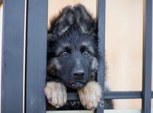 Perrito muy triste en jaula del refugio imágenes de archivo libres de regalías