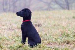 Perrito negro fotografía de archivo libre de regalías