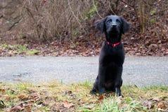 Perrito negro imágenes de archivo libres de regalías