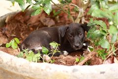 Perrito negro Imagen de archivo