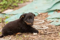 Perrito negro lindo del perro perdido Foto de archivo