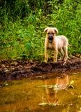 Perrito perdido cerca del agua Foto de archivo