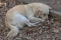 Perrito perdido - Pompeya Fotos de archivo libres de regalías