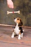 Perrito presente Imagen de archivo