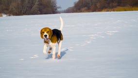 Perrito que corre a través de la nieve