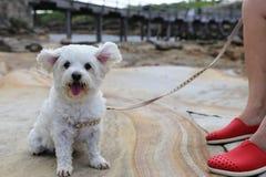 Perrito que es emocionado con el fuerte viento Fotos de archivo